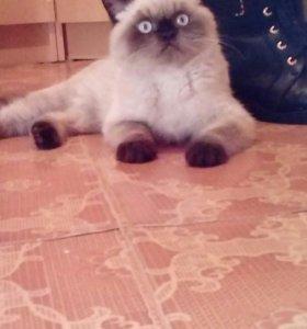 Котик приглашает кошечек на вязку