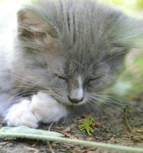 Кошка в варежках
