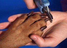 Стрижка когтей собак на дому