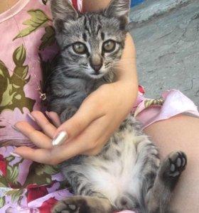 Котята 1 мальчик, в добрые руки