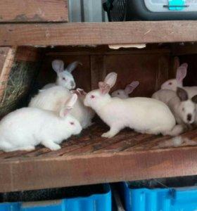Мясо кроликов.