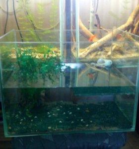 аквариум для морских черепашек