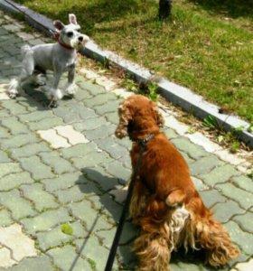 Гуляю с собаками