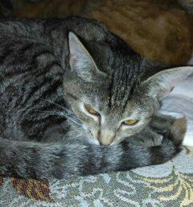 Ласковые котята ищут дом