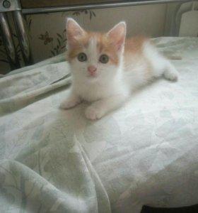 Котенок в частный дом.