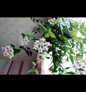 Цветы продажа