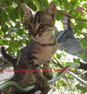 котята 3 месяца