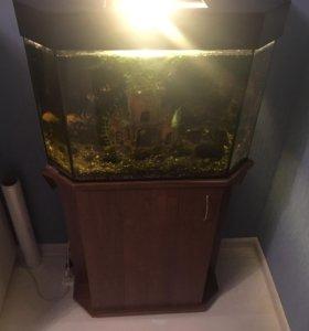 Аквариум с рыбками и кормом