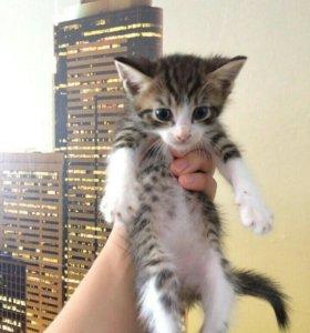 Отдам в хорошие руки котят