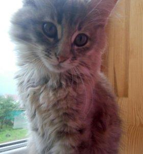Кошечка в добрые руки! :)