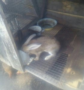 Продаи кроликов