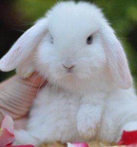 Карликовые крольчата и ежата