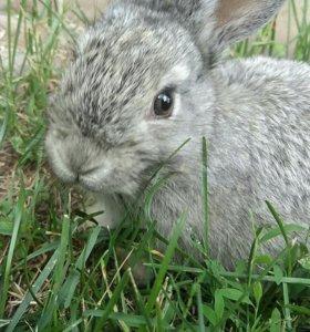 Кролик 1 мес
