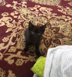 Котик, родился 8 июня, к лотку приучен, кушает всё