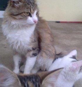 2 кота и 2 кошки в добрые руки