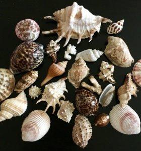 Раковины средиземного моря