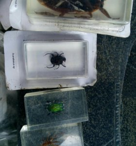 Жуки бабочки тараканы