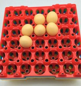 Лотки яиц инкубатор лоток курица утка фазан
