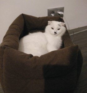 Лежанка для кота/кошки