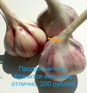 Чеснок. 200 рублей за килограмм