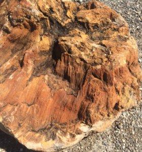 Валун окаменелое дерево