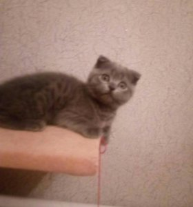 Котята плюшечки