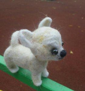 Собака чихуа хуа - сувенир. Игрушка из шерсти