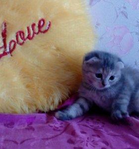 Котята,рыжий кот,серая кошечка!!!