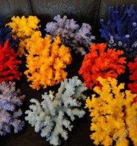 натуральные кораллы