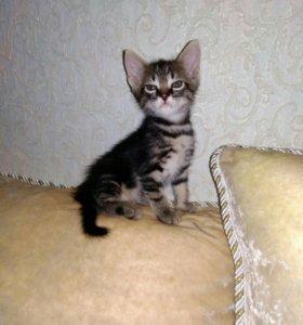 Котик Добрым хозяевам №