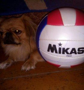 """Волейбольный мяч """"Микаса МВ210"""""""