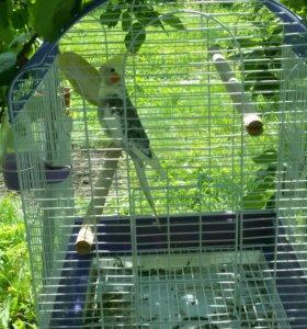Попугай-корелла!