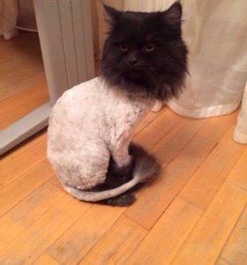 Стрижка кошек и котов на дому