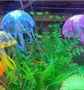 Медузы в аквариум