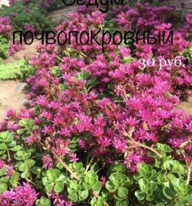 Садовые цветы, многолетники