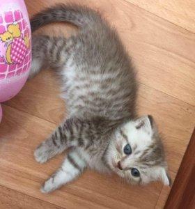 Котята пушистые комочки счастья
