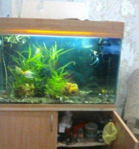 Оквариум с рыбками