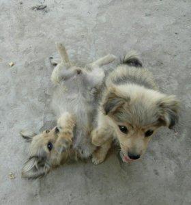 Собаки ( шенки3 м )