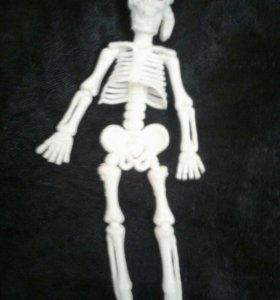 Скелетик.