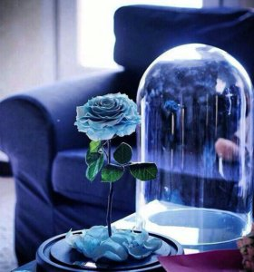Вечная Роза 🌹