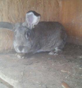 Кролики, мясо кролика.