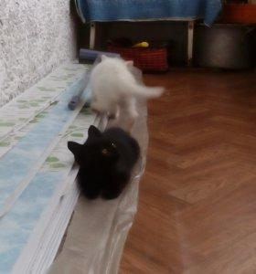 Котята, к лотку приучены