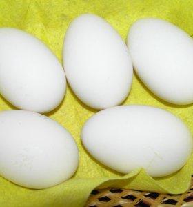 Яйцо от домашней птицы