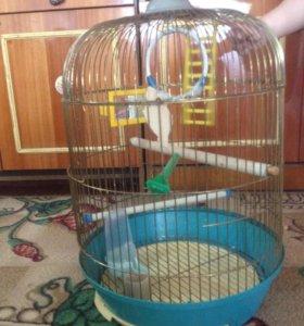 Клетка для попугаев, птиц