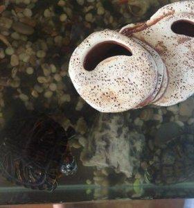 Черепашки и аквариум