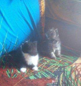 Двухмесячные котята с кошкой