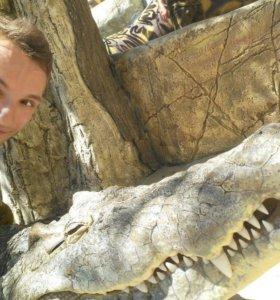 Зуб - Клык крокодила