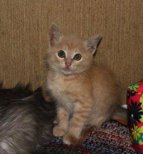 Особенный котёнок Одуванчик