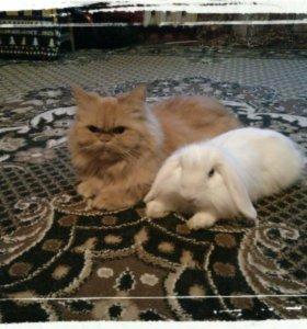 Кошка,кролик