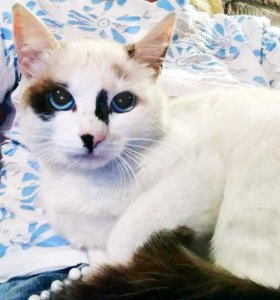 Необыкновенная кошка Лукирея в дар!
